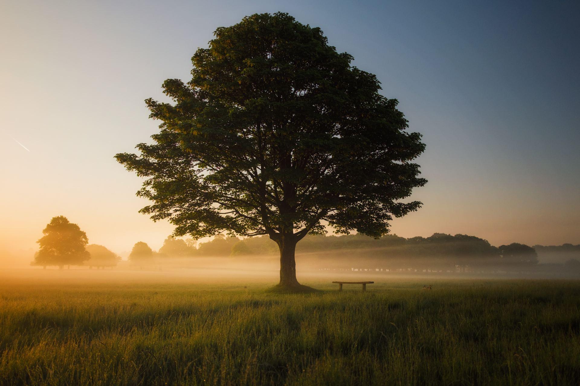 Den mäktiga eken