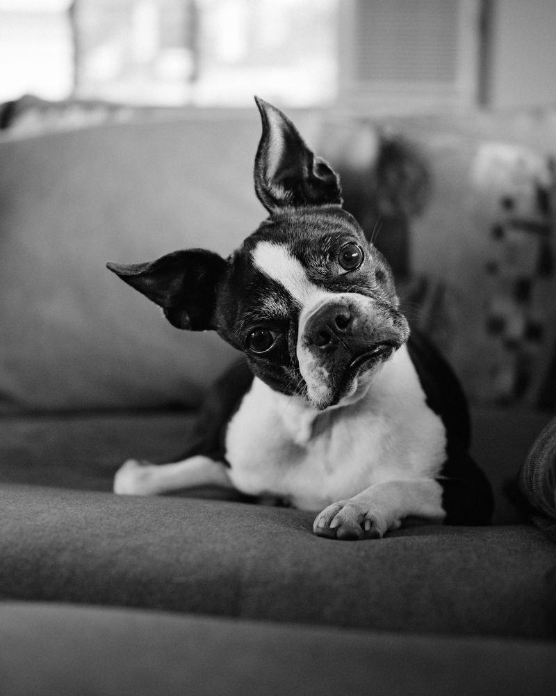 Porträtt på våra husdjur