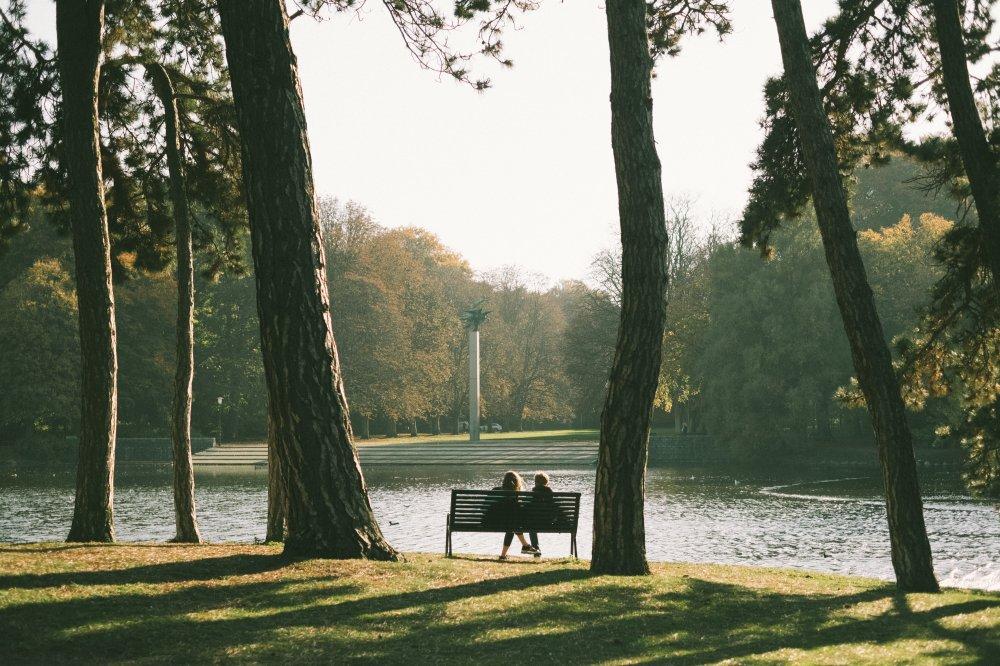 Trädbesiktning i Malmö som kan vara avgörande för trädets livslängd